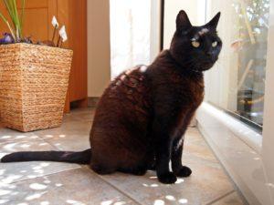Katzenbetreuung zu Hause
