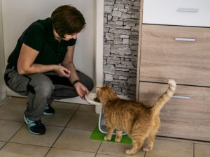 Fütterservice Katzenbetreuung