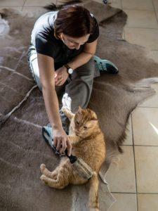 Fellpflege bei der Katze